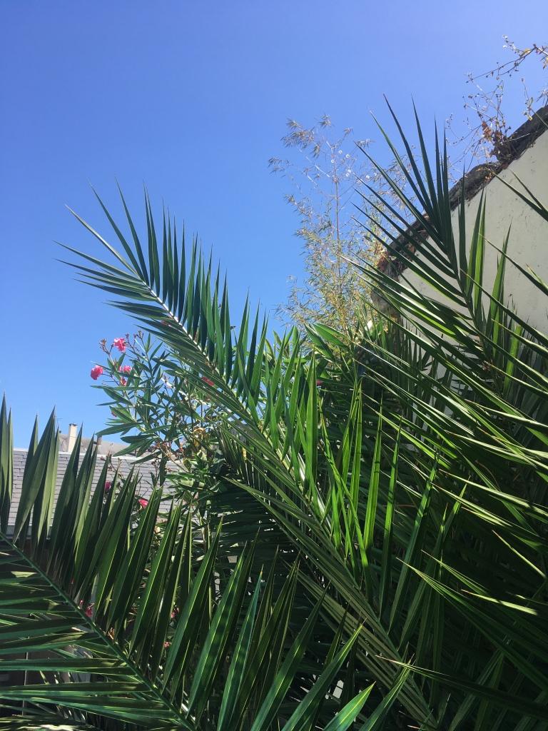 photo de plantes vertes sur le fond du ciel bleu