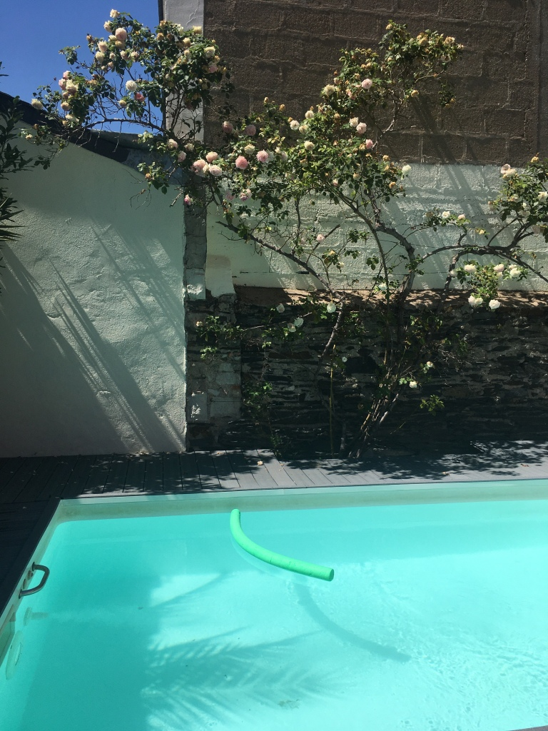 photo d'une piscine, avec dans le fond un rosier